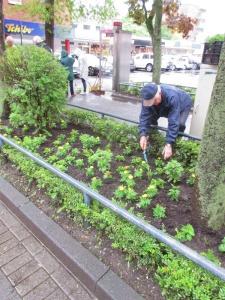 Bürger befpflanzen Beete in Rodenkirchen